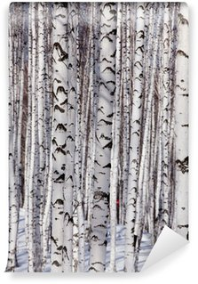 Fototapeta Winylowa Brzozowy las