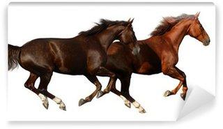 Vinylová Fototapeta Budenny koně tryskem - na bílém