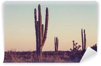 Vinylová Fototapeta Cactus v Mexiku
