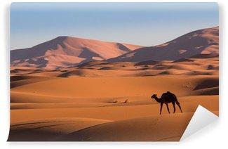 Vinylová Fototapeta Camel v poušti Sahara, Maroko