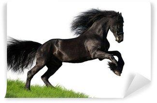 Vinylová Fototapeta Černá Fríský kůň cválá na kopci