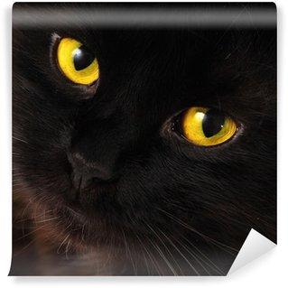 Vinylová Fototapeta Černá kočka, díval se na vás s jasně žlutýma očima