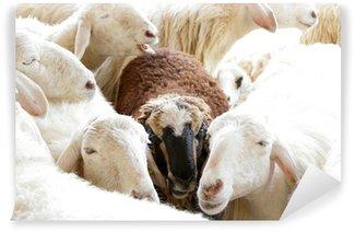 Vinylová Fototapeta Černá ovce ve skupině