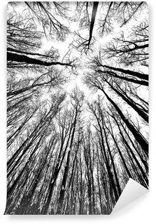 Vinylová Fototapeta Černé a bílé siluety stromů