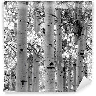 Vinylová Fototapeta Černý a bílý obraz osiky stromů