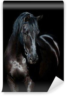 Vinylová Fototapeta Černý kůň izolovaných na černém pozadí