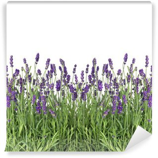 Vinylová Fototapeta Čerstvé levandule květiny izolovaných na bílém
