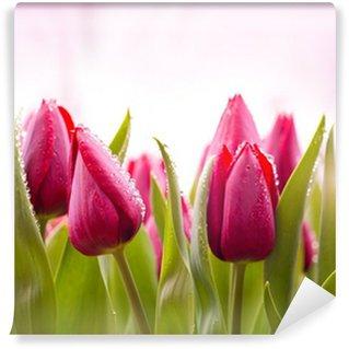 Vinylová Fototapeta Čerstvé tulipány kapkami rosy