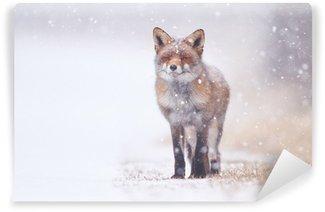 Vinylová Fototapeta Červená liška v