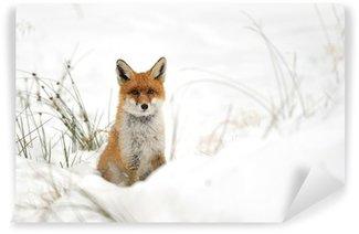 Vinylová Fototapeta Červená liška ve sněhu
