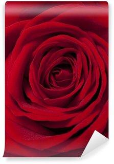 Vinylová Fototapeta Červená růže