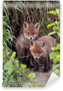 Vinylová Fototapeta Červené lišky obecné (Vulpes vulpes) 45 dní staré.