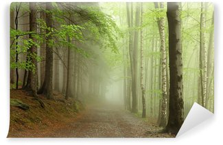 Vinylová Fototapeta Cesta na hranici mezi jehličnatými a listnatými stromy