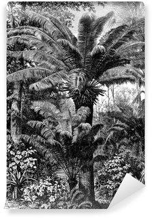 Vinylová Fototapeta Chamaerops - Trpaslík Palm Tree