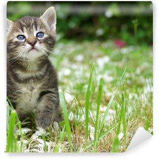 Vinylová Fototapeta Chaton Tigre dans l'herbe