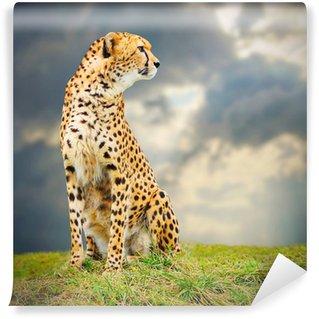 Vinylová Fototapeta Cheetah (Acinonyx jubatus) v africké savaně.