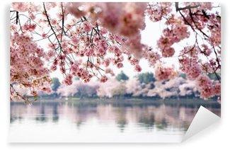 Vinylová Fototapeta Cherry Blossoms přes přílivové nádrže ve Washingtonu DC