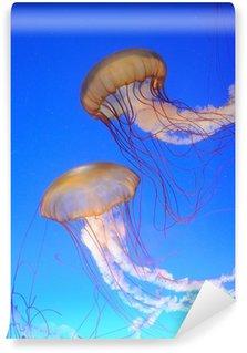 Vinylová Fototapeta Chrysaora fuscescens medúzy v modré vodě