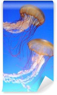 Vinylová Fototapeta Chrysaora fuscescens medúzy