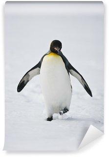 Vinylová Fototapeta Chůze tučňák