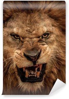 Vinylová Fototapeta Close-up shot řvoucí lev