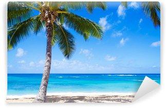 Vinylová Fototapeta Coconut Palm tree na písečné pláži na Havaji