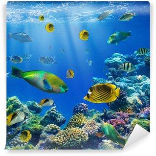 Vinylová Fototapeta Coral kolonie a korálové ryby