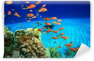Vinylová Fototapeta Coral Reef a Scuba Diver