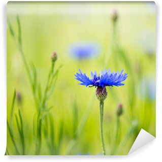 Vinylová Fototapeta Cornflowers