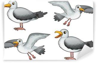 Vinylová Fototapeta Čtyři ptáci