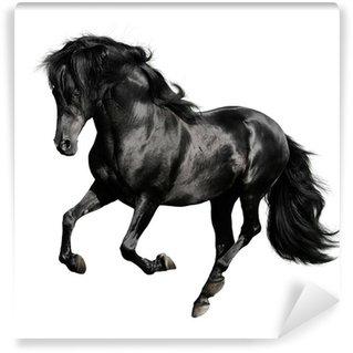 Fototapeta Winylowa Czarny koń biegnie galopem na białym backgrond