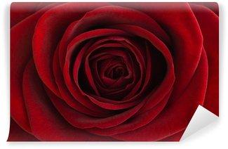 Fototapeta Vinylowa Czerwona róża z bliska