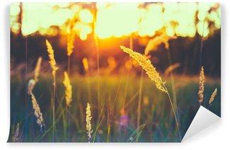 Fototapeta Winylowa Czerwone wytrawne trawa łąka