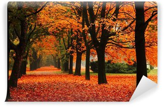 Fototapeta Winylowa Czerwony jesienią w parku