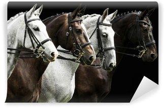 Fototapeta Winylowa Cztery konie w konkurencji ujeżdżenia samodzielnie na czarny