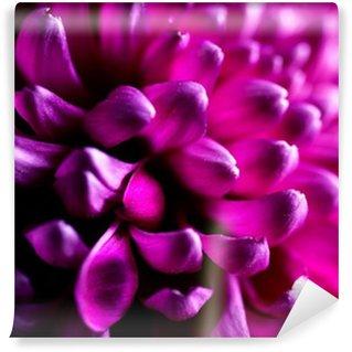 Vinylová Fototapeta Dahlia podzim květů detailní