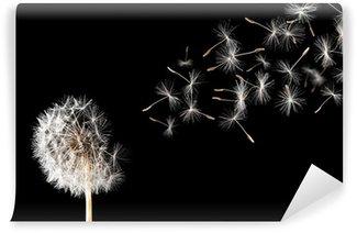 Fototapeta Winylowa Dandelion na czarnym tle