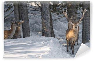Vinylová Fototapeta Deer na sněhu pozadí