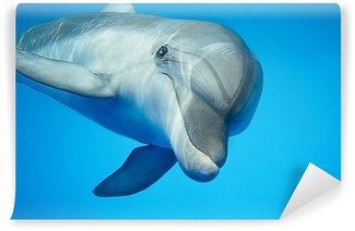 Fototapeta Winylowa Delfin pod wodą