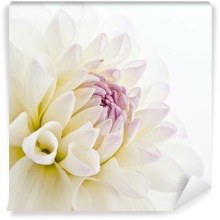 Vinylová Fototapeta Delicate White Dahlia