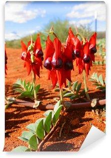 Fototapeta Winylowa Desert Sturt Pea. Northern Territory Australia
