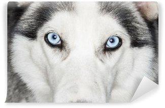 Vinylová Fototapeta Detailní záběr husky psa