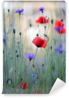 Vinylová Fototapeta Divoká květina louka s vlčí máky a chrpy