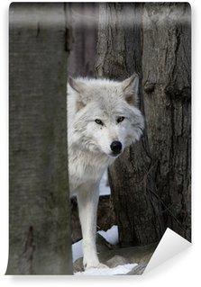 Vinylová Fototapeta Dřevo vlk