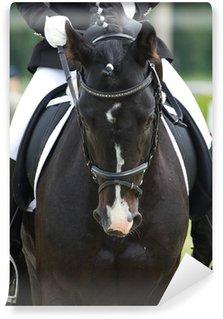 Vinylová Fototapeta Drezurní koně a jezdce