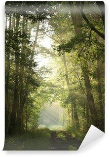 Fototapeta Vinylowa Droga gruntowa przez las liściasty w mglisty poranek