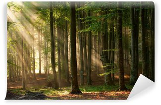 Fototapeta Vinylowa Drzewa las jesienią. charakter zielone światło słoneczne drewna tła.