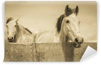 Vinylová Fototapeta Dva bílé koně