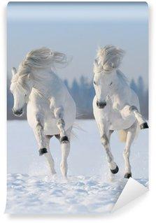 Vinylová Fototapeta Dva cválá snow-bílí koně