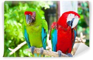 Vinylová Fototapeta Dva papoušci kakadu